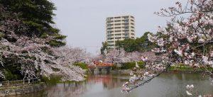 亀城公園の風景